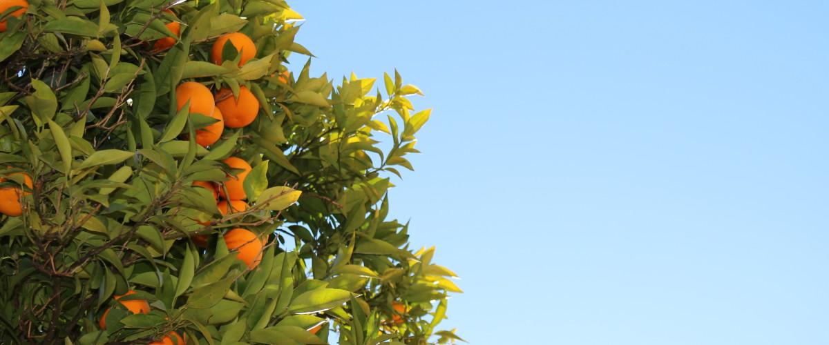 Oranges Slide